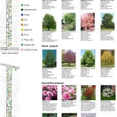 amenajare urbana si peisagera - Razvan Botofan - studiu vegetatie